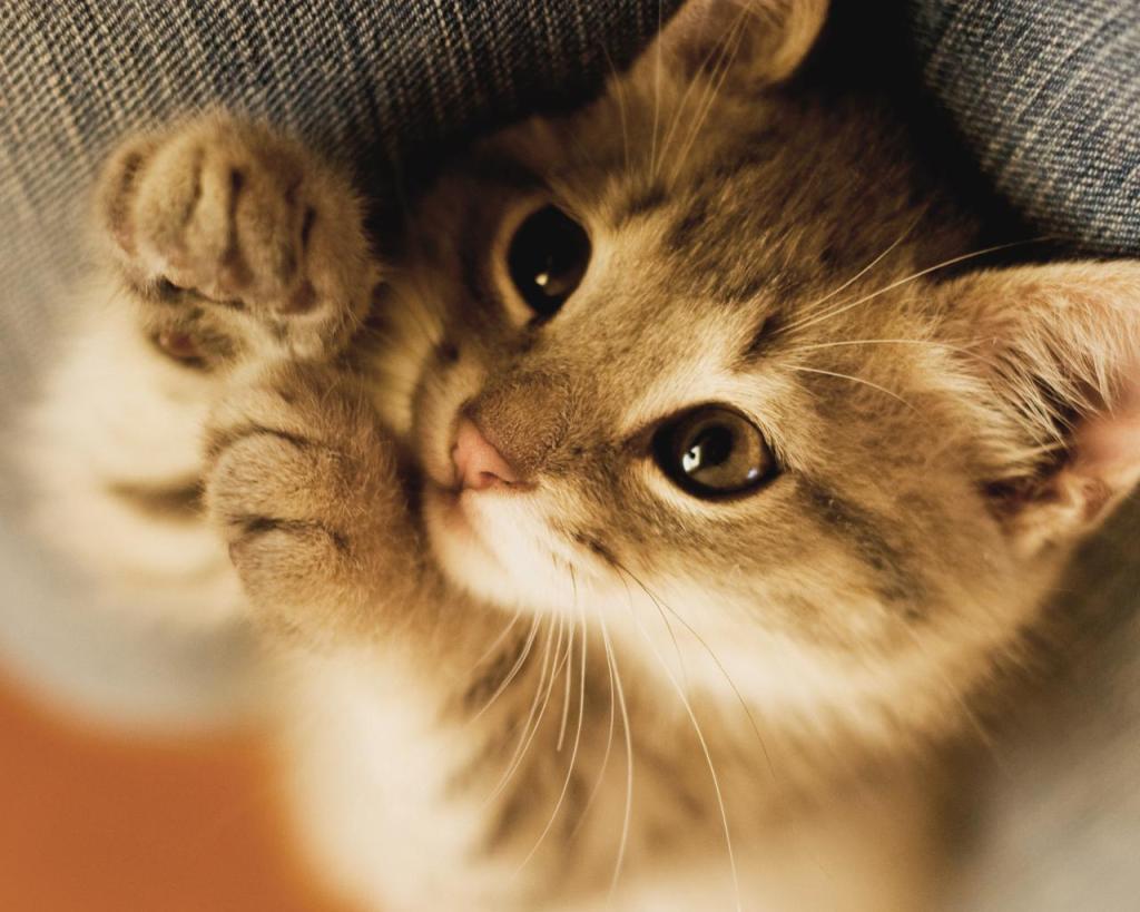 cute_kitty-1462206